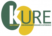 UAB Kidney Undergraduate Research Experience (KURE) Logo